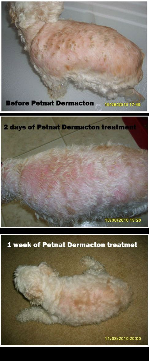 How To Treat Dermatitis In Dogs