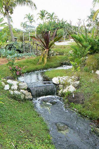 Botanical Garden Naples Fl Tropical Botanical Garden