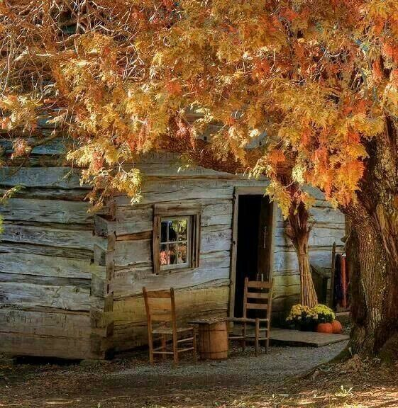 Cabin In The Woods Card Crafts Pinterest
