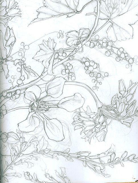 Contour Line Drawing Flowers : Contour flower drawing line pinterest
