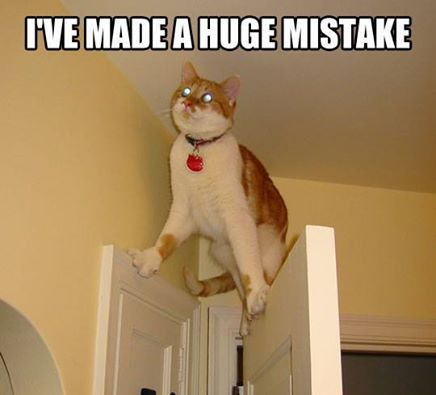 I 39 Ve Made A Huge Mistake Cute And Funny Animals Pinterest