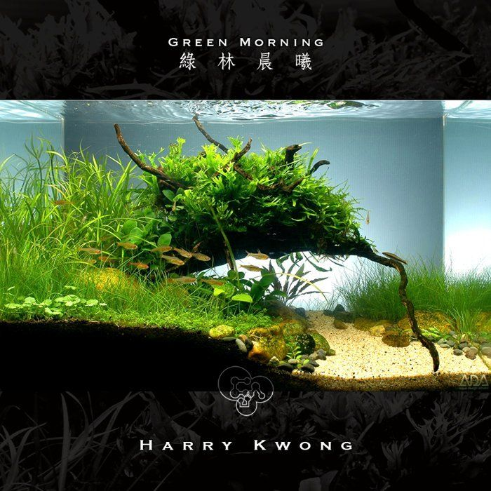 CAU ???? - Green Morning Tanks & Aquariums Pinterest
