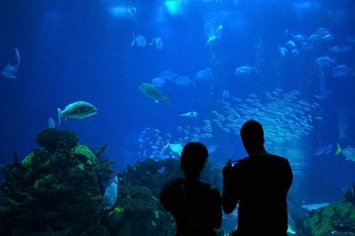 Oceanarium, Bournemouth Family Fun Pinterest