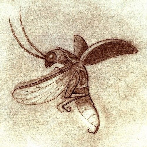 Cute insect drawing - photo#10