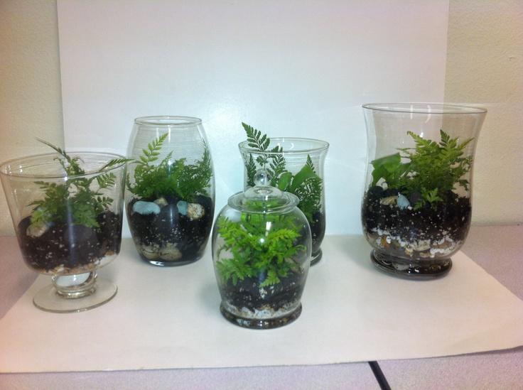 fern terrarium ideas gardening terarium pinterest. Black Bedroom Furniture Sets. Home Design Ideas