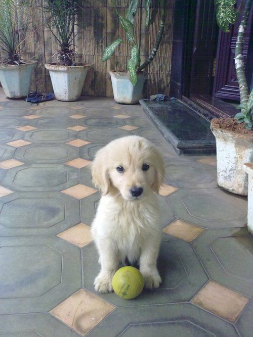 Will you play with me now?