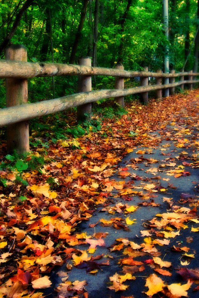fall phone wallpaper keep close to nature 39 s heart