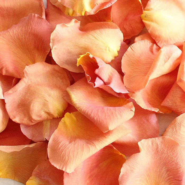 Peach Real Rose Petals Wedding Flowers Same Day Shipping