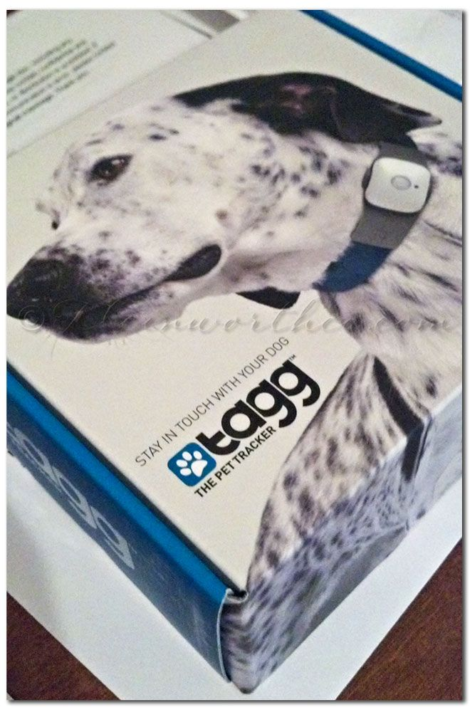 pet tracking device iphone