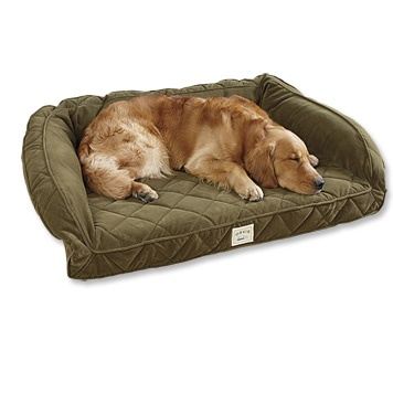 Dogs deserve a Tempur-Pedic bed as well.