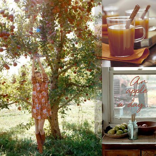 Mulled Spiced Cider | Recipes | Pinterest