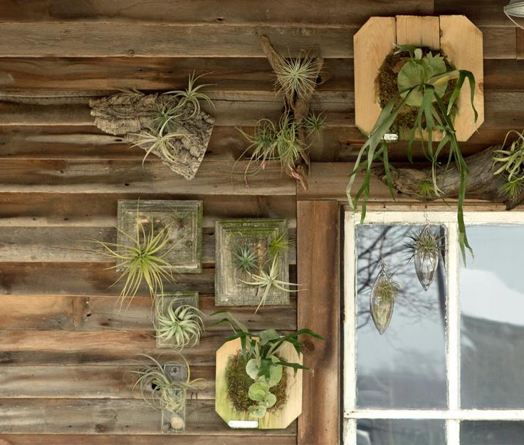 Create living art with tillandsia, mounted staghorn ferns and wall terrariums. http://www.shopterrain.com/living-art/