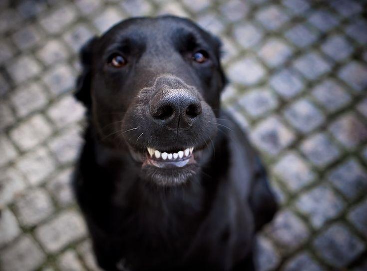 smil lab