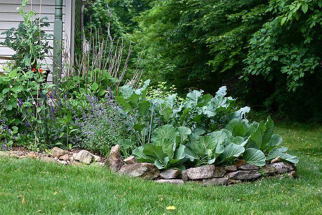 Backyard Edible Garden Ideas : edible front yard  Garden ideas  Pinterest