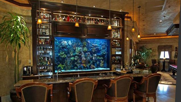 Bar Fish Tank Fish Tanks Pinterest