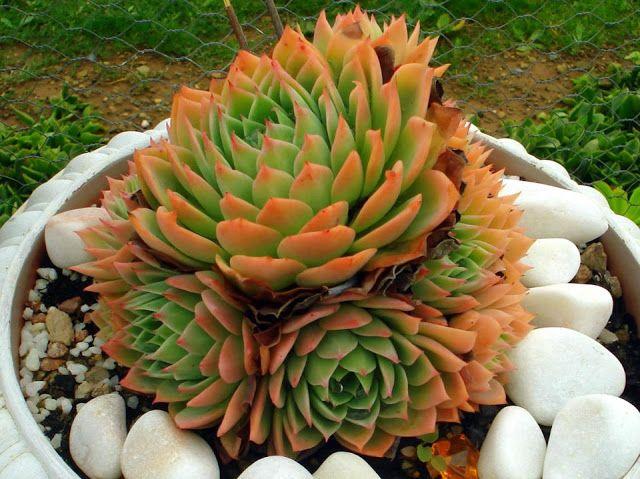 Fotografije kaktusa - Page 3 45f2604480c703f14b7936361bd91e80