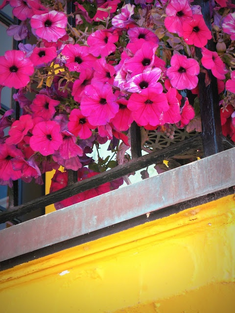 Hot Pink & Sunshine Yellow ~ Venetian Court, Capitola by the Sea, CA ~ Original Colour Photograph by Suzanne MacCrone