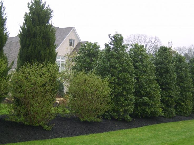 Pin by resa gobs on fencing privacy pinterest - Shrubbery for privacy ...