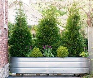Privacy planter on wheels gardening pinterest for Outdoor privacy screen on wheels