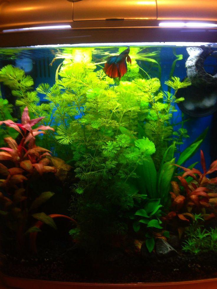 Pretty betta fish tanks for Pretty betta fish
