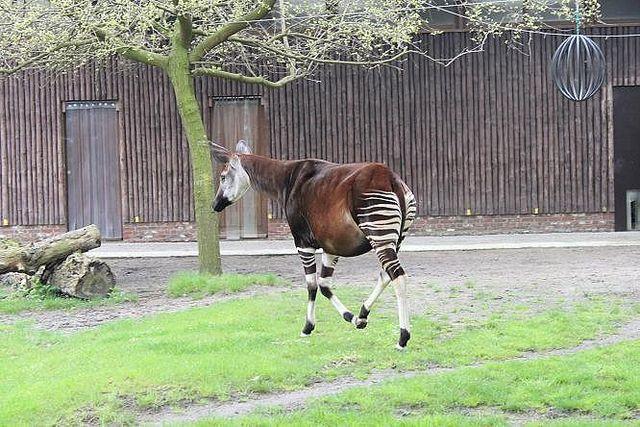 Antwerp Zoo  #Fitness #Diet