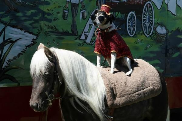 Image result for dog and pony show