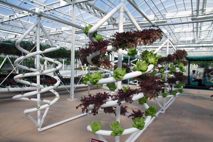 hydroponic gardening disneys epcot center Aquaponics Plans Download