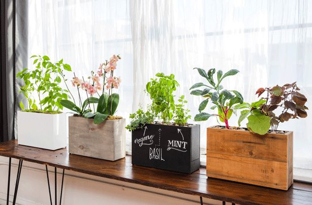 Countertop Hydroponics : ... Roots: 6 Types of Hydroponic Gardening Systems and Countertop Planters