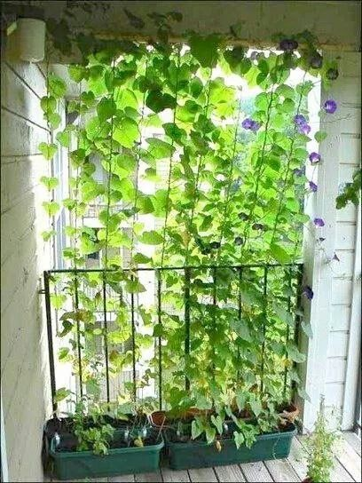 Natural screen deck porch privacy ideas pinterest for Natural outdoor privacy screens