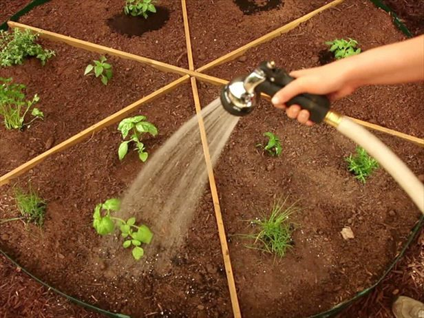 The kids love this one: How to plant a pizza garden --> http://hg.tv/pb8e