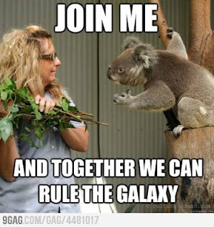 The force is strong in this koala