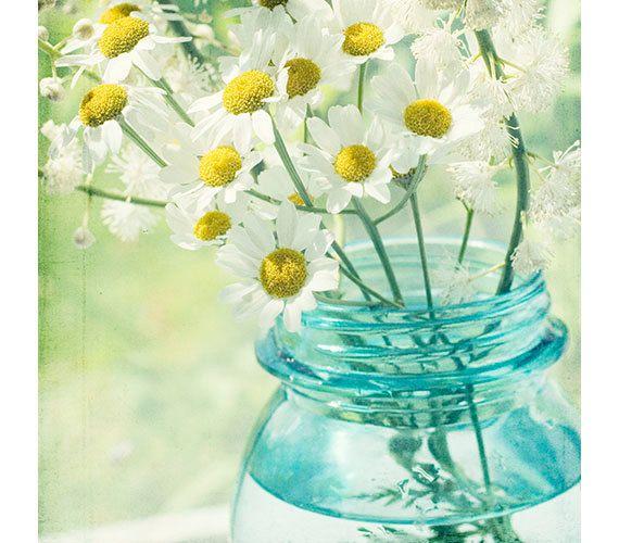 ...daisy daisy