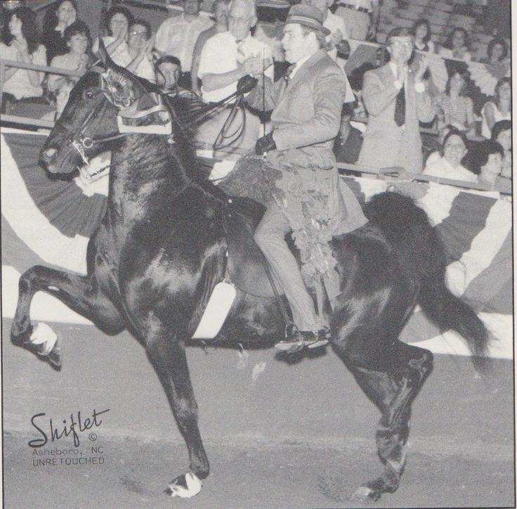 ... Yorkshire Pudding. He was a World's Champion 5gaited stallion and