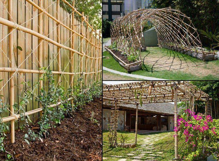 Bamboo trellis garden ideas pinterest for Bamboo garden designs