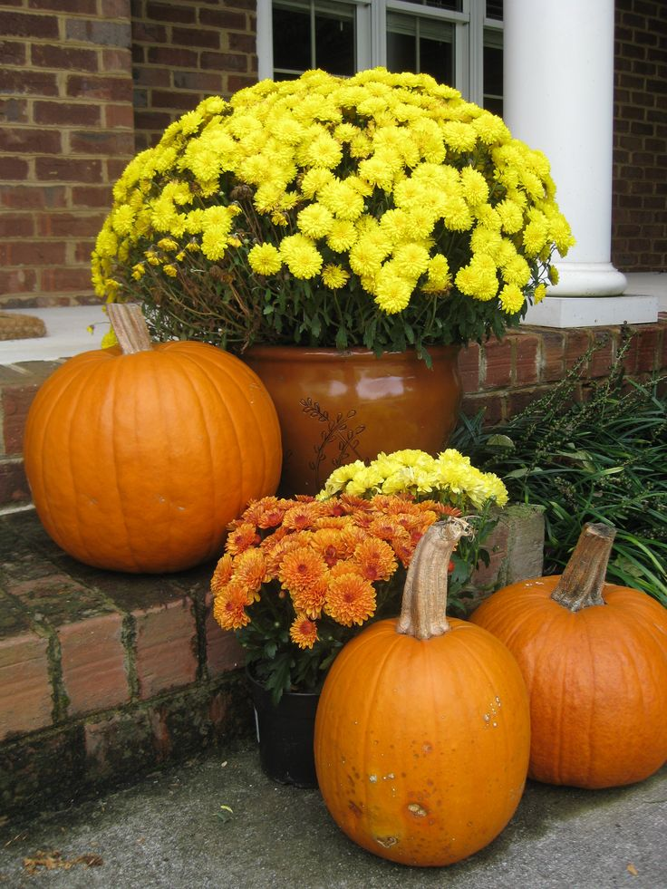 Can 39 t go wrong with mums and pumpkins holidays pinterest Fall outdoor decorating with pumpkins