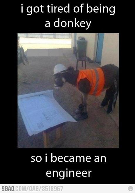 Donkey Engineer