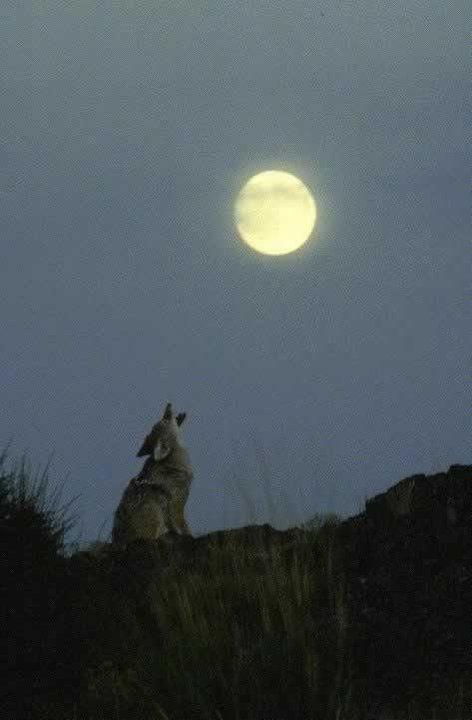 howl at the moon moon pinterest. Black Bedroom Furniture Sets. Home Design Ideas