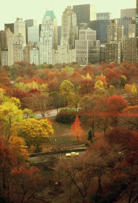 new york in autumn