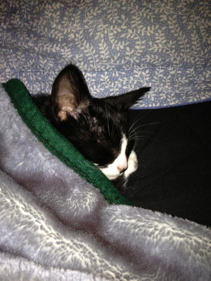 Sick cat cute cat | Cats, Cats, Cats | Pinterest