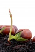 From little acorns grow big oaks
