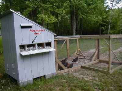 coop chikens next guinea hen house plans