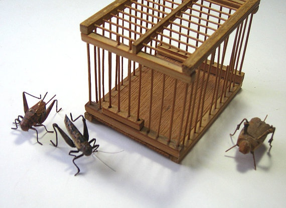 how to put crickets in a cage