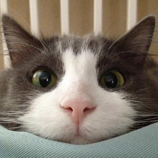 Cat Tongue Lick Gif