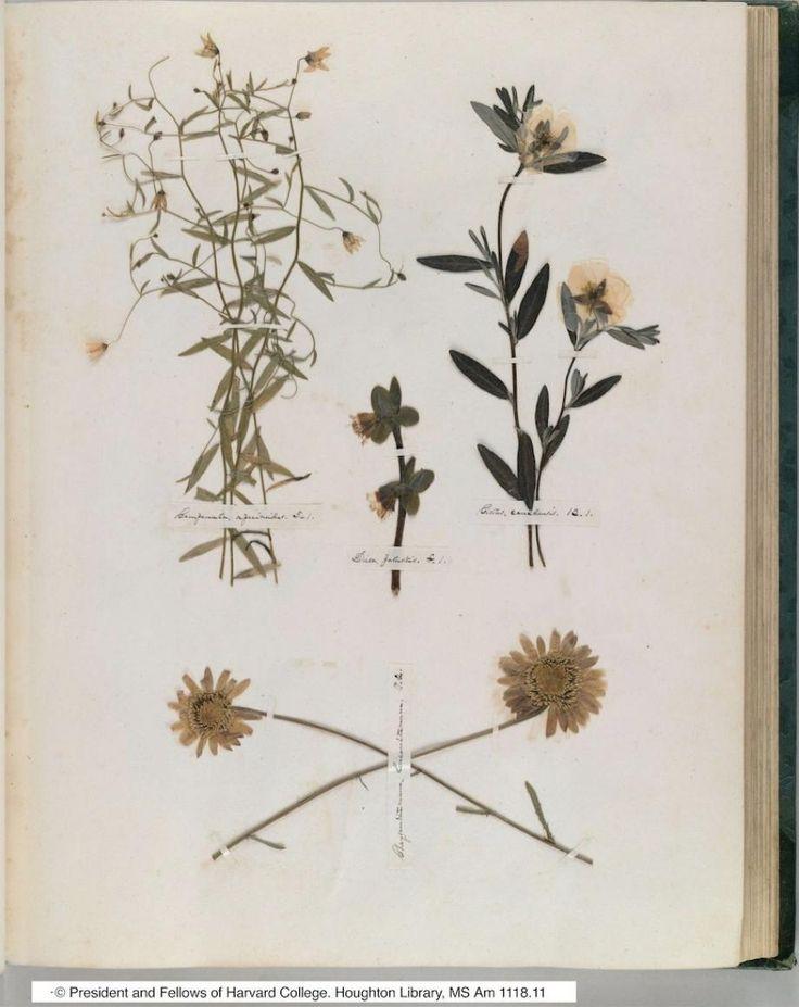 ♕ Emily Dickinson's Herbarium