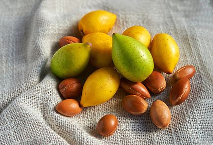 Photos of Fresh Argan fruit and nuts By award winning food photographer Paul Williams to download