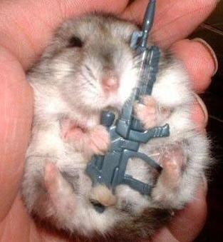 Funny animal with a  gun!