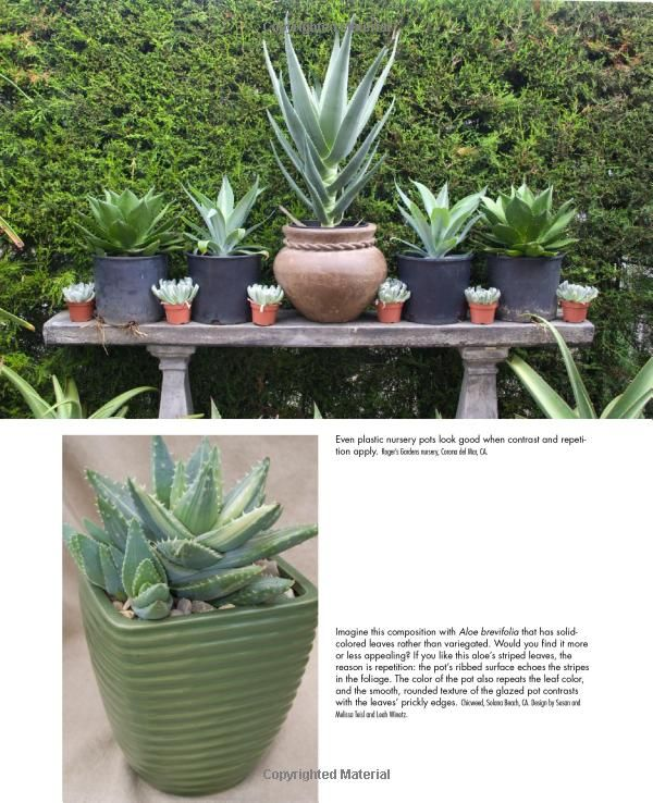 Pin by julie robertson on retail plant displays pinterest - Succulent container gardens debra lee baldwin ...