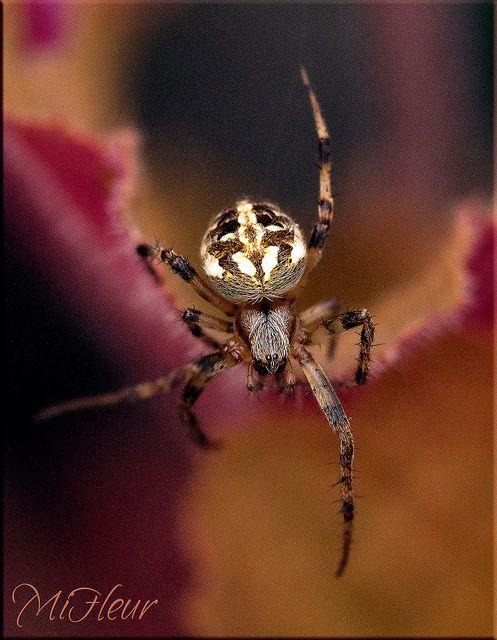 Spider macro | Flick