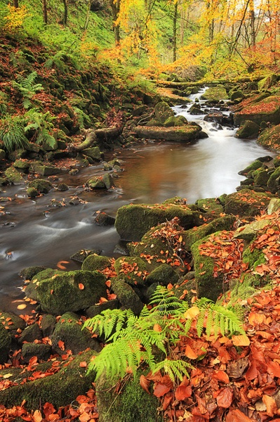 Autumn, Colden Clough, Yorkshire, England