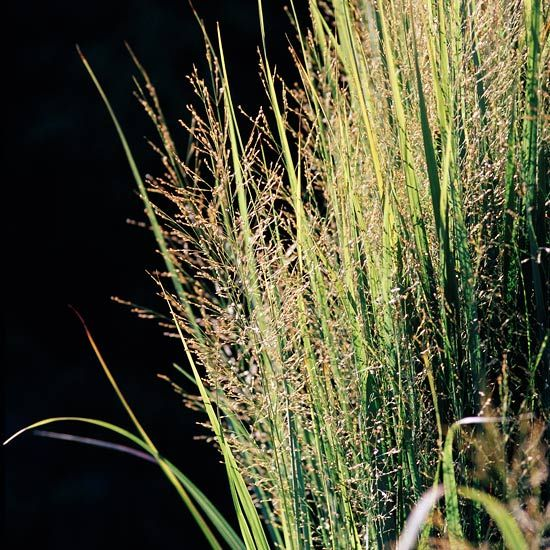 Top plants that thrive in clay for What ornamental grasses grow in shade